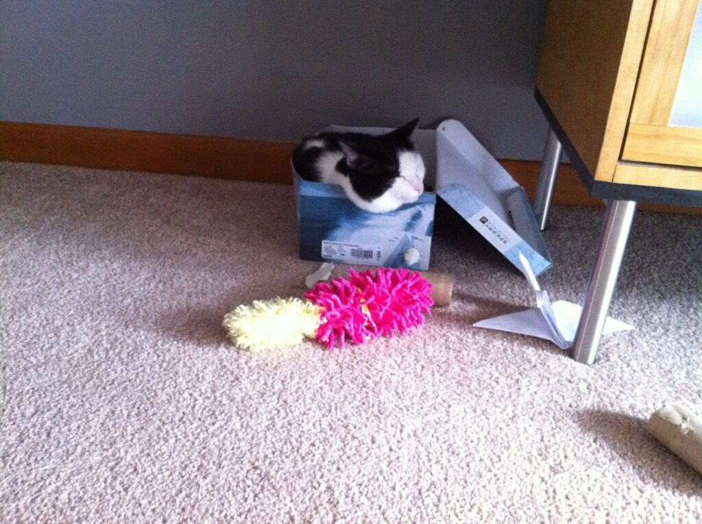 Oreo the cat enjoying napping in a box